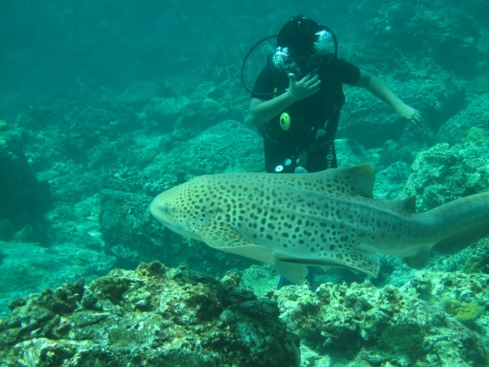 1st ever Leopard Shark