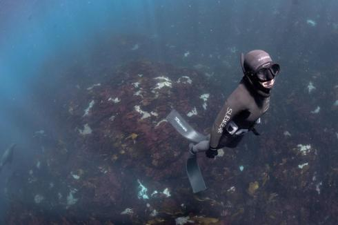PADI Free Diving