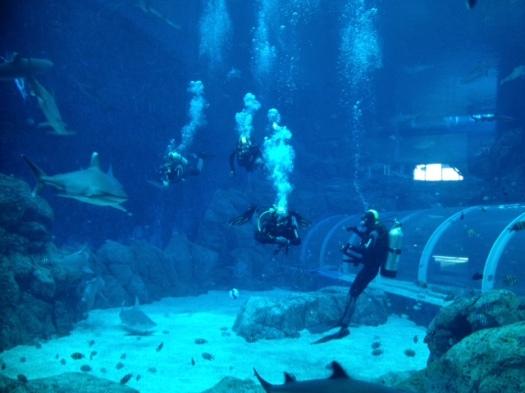 shark aqaurium divers