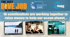 Blue Season Bali - Best Dive Job