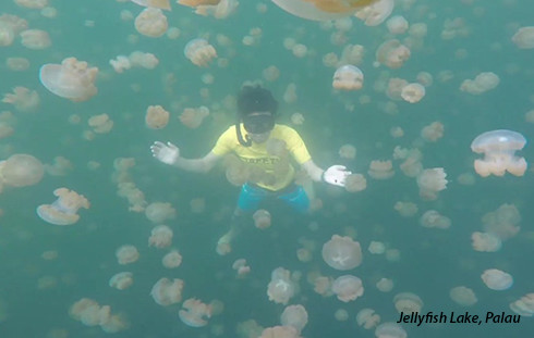 Freediving in Jellyfish Lake