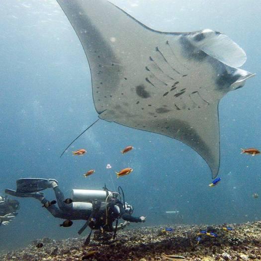 Eko 2 _Blue Marlin Komodo