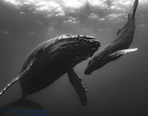 #290d9c9 BW Whales