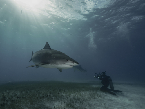 727b904 photographing a shark